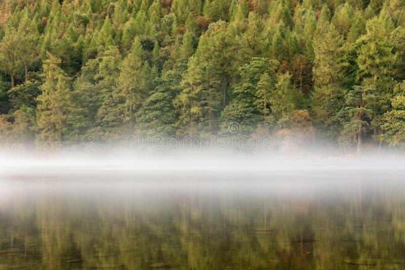 Деревья осени отражая в озере с туманом стоковое изображение rf