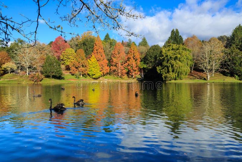 Деревья осени отраженные в красивом озере стоковое изображение