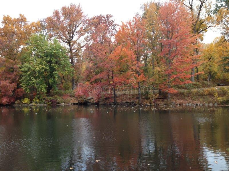 Деревья осени отраженные в озере в падении стоковое фото