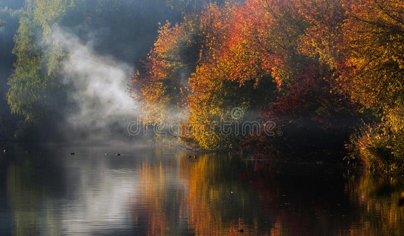 Деревья осени с красными и желтыми листьями отражены в воде озера с туманом стоковые фотографии rf