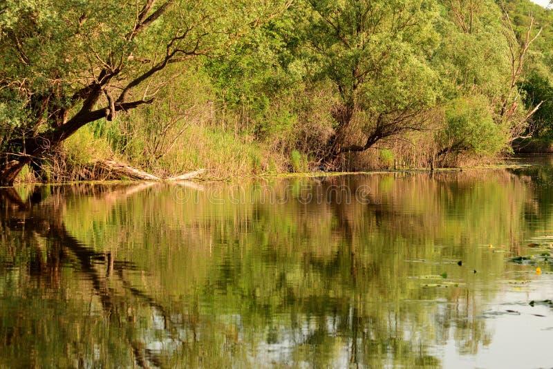 Деревья отражая в воде на заповеднике Hutovo Blato стоковое фото rf