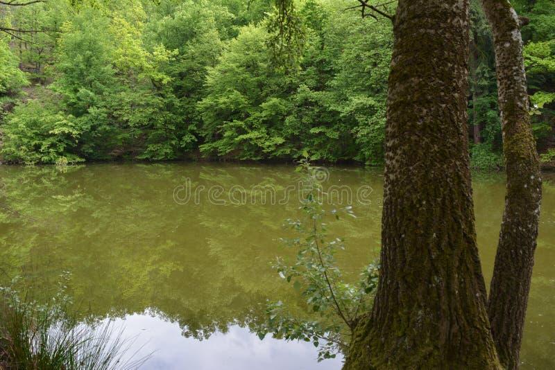 Деревья отражая в старом покрытом грязь пруде на замке Дорис в чехии стоковое изображение rf