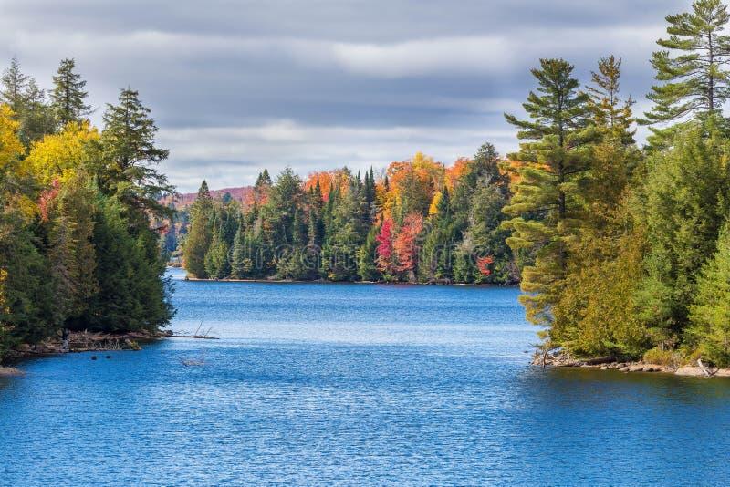 Деревья падения с озером стоковое фото