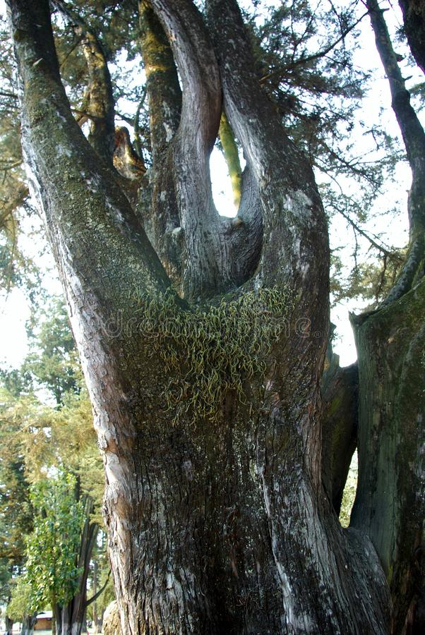 Деревья парка 006 El Ejido стоковая фотография