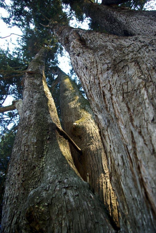 Деревья парка 004 El Ejido стоковое фото