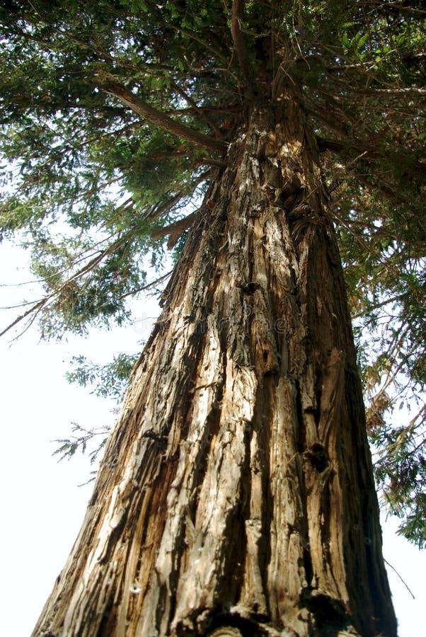 Деревья парка 003 El Ejido стоковое фото rf