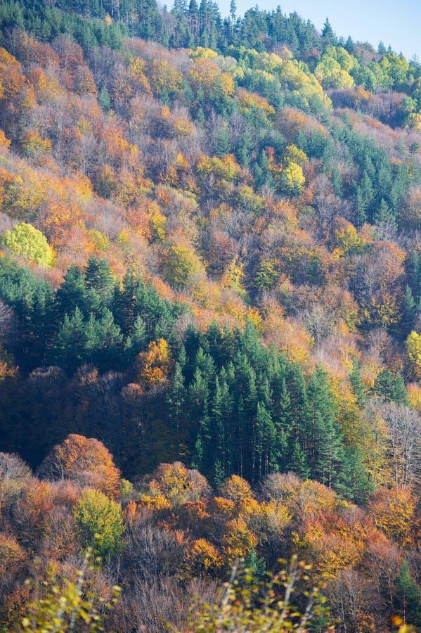 Деревья падения в лесе стоковые фотографии rf