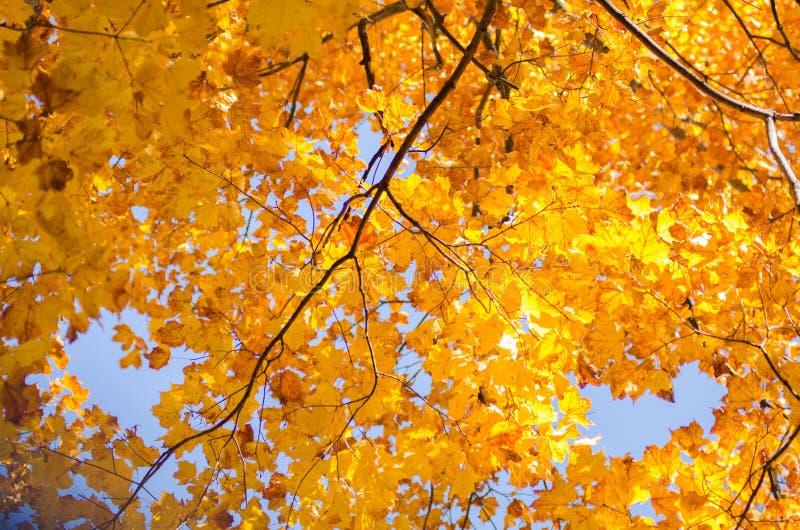 Деревья падения осени на голубом небе стоковые изображения rf