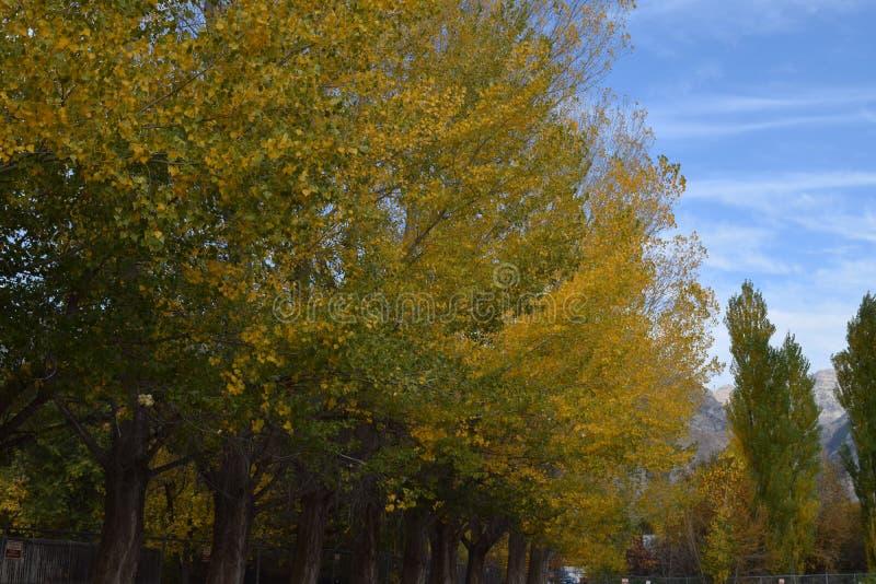 Деревья падения стоковые изображения rf