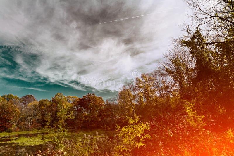 Деревья погоды красивого ландшафта пасмурные и небо в солнечной осени стоковое изображение rf