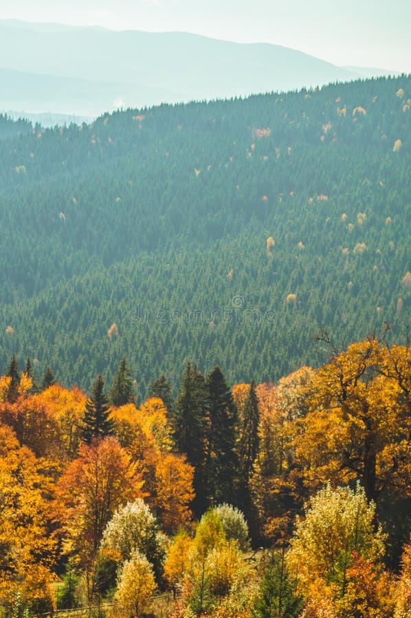 Деревья, покрытые с листьями желтых и шарлаха, на которых падения греют светлые горы Прикарпатско, Украин Сцена деревни осени стоковые фотографии rf