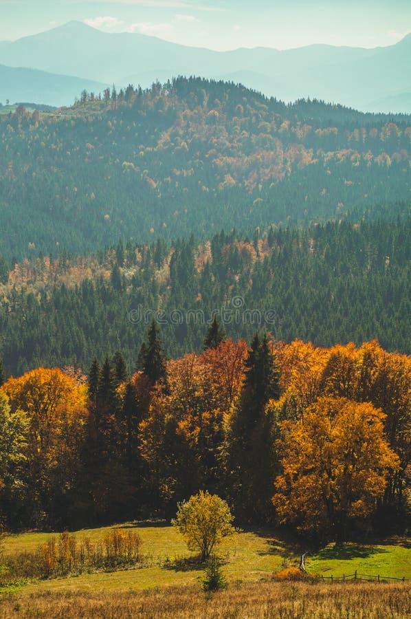 Деревья, покрытые с листьями желтых и шарлаха, на которых падения греют светлые горы Прикарпатско, Украин Сцена деревни осени стоковая фотография rf