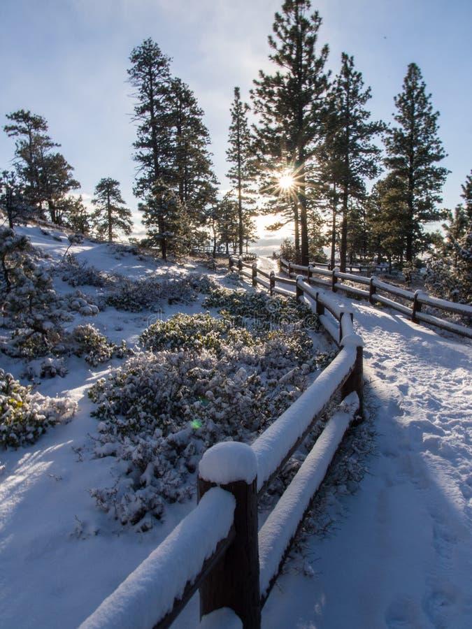 Деревья покрытые с снегом, восходом солнца стоковая фотография rf