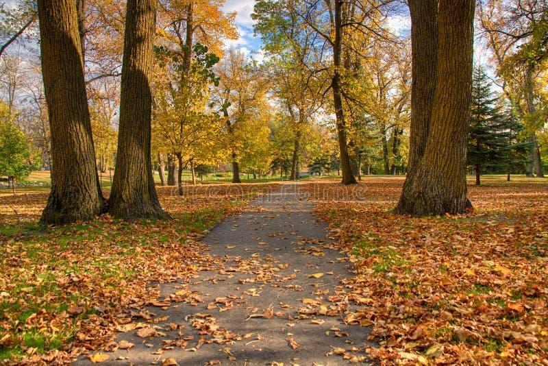 Деревья полные цветов осени стоковые фотографии rf