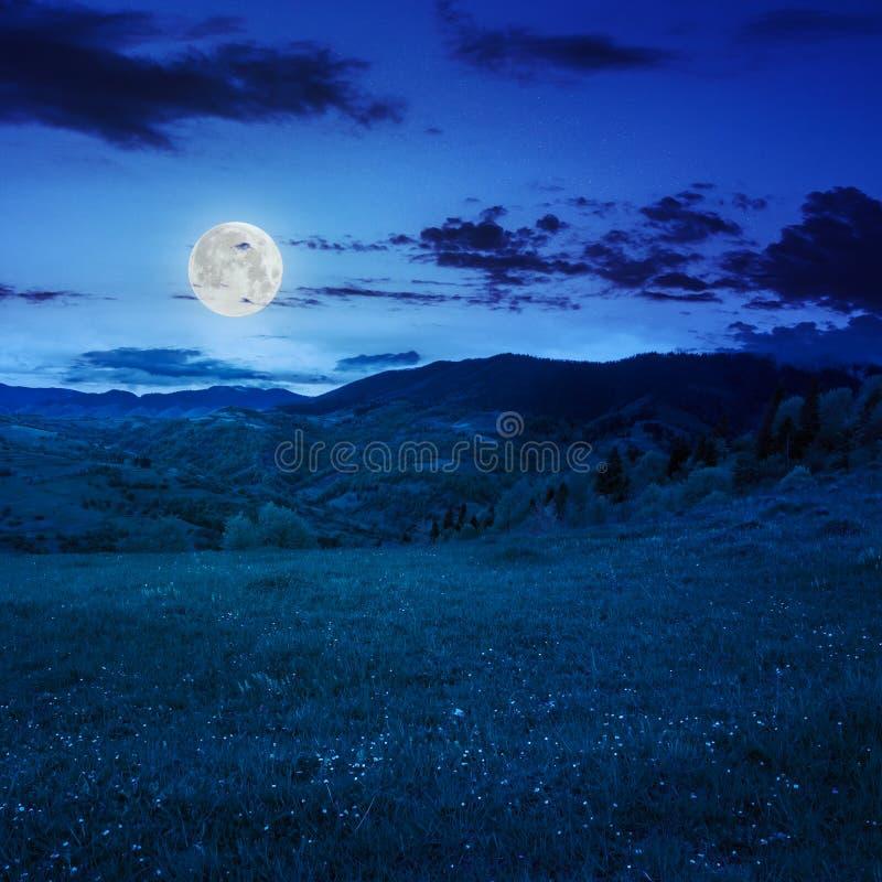 Download Деревья приближают к лугу в горах на ноче Стоковое Изображение - изображение насчитывающей черный, сезон: 41658985