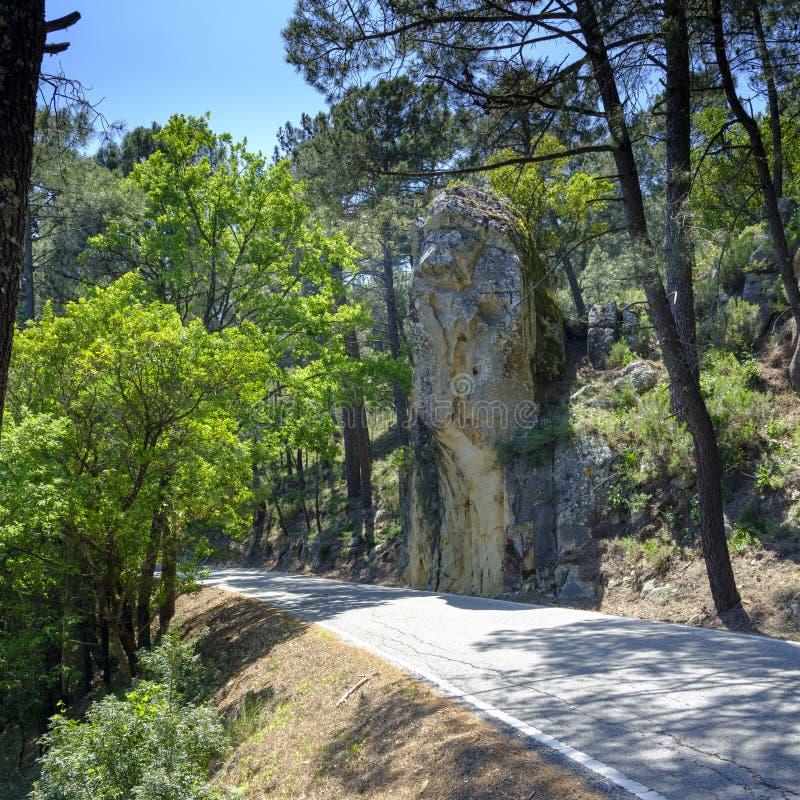 Деревья пробочек Андалусии, Испании стоковое фото