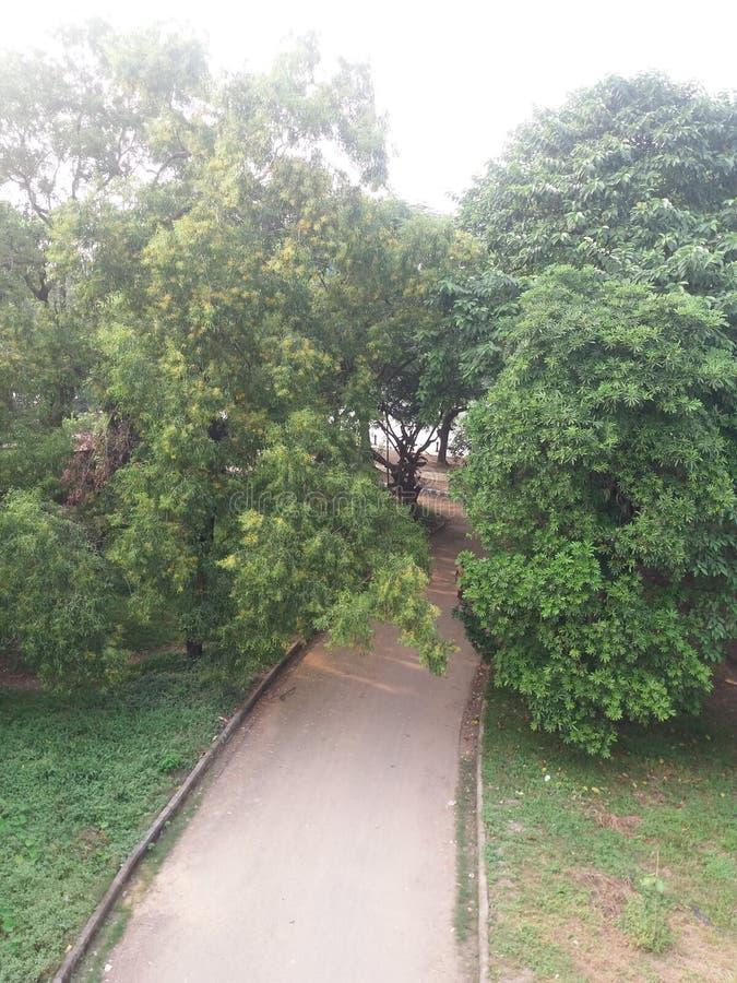 Деревья района стоковое изображение