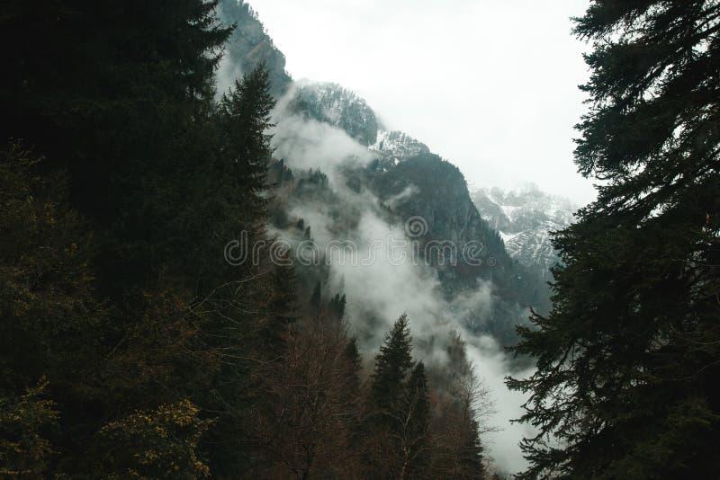 Деревья растут на скалистых горах стоковые фотографии rf