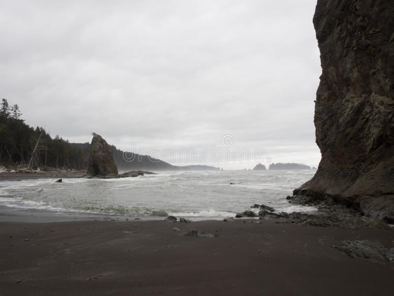 Деревья растут на стогах моря на песчаном пляже стоковые фото