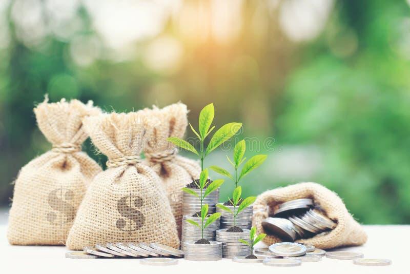 Деревья растя на деньгах монеток с деньгами кладут в мешки на зеленой предпосылке, стоковые фото