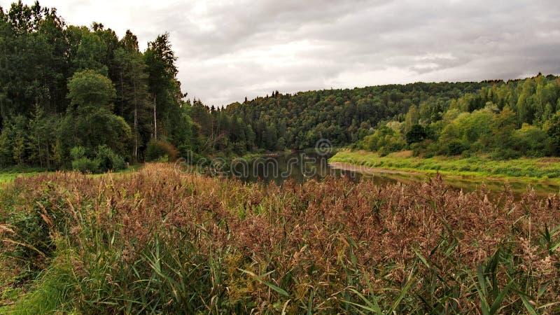 Деревья реки и осени леса стоковое изображение