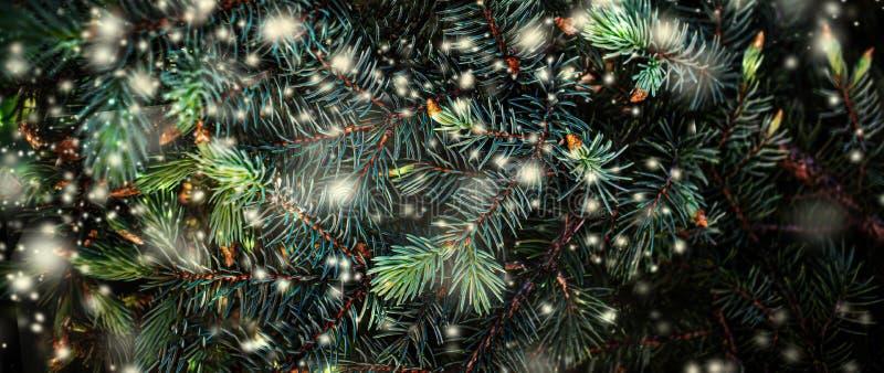 Деревья рождественские ветви со снегом Фестивальные широкоформатные обои Xmas для дизайна нового года Белые снежинки Плоский слой стоковые изображения