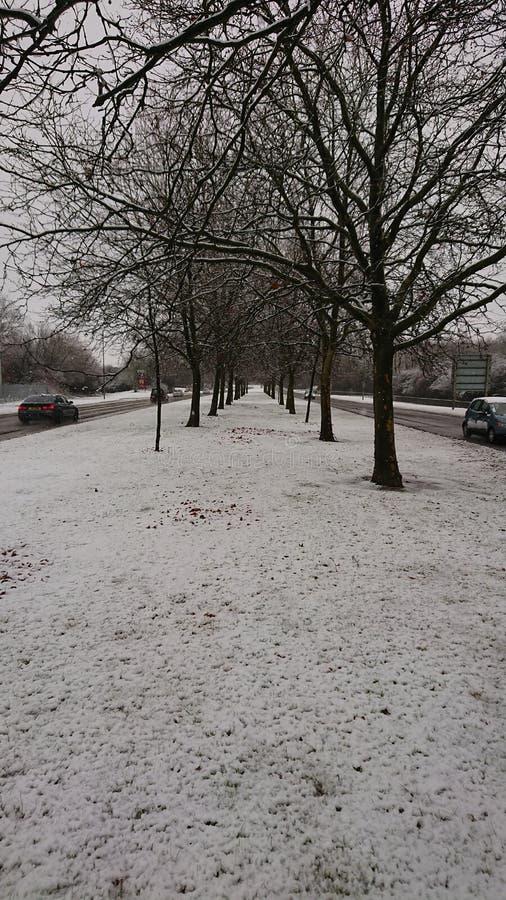 Деревья снега на шоссе стоковые изображения rf