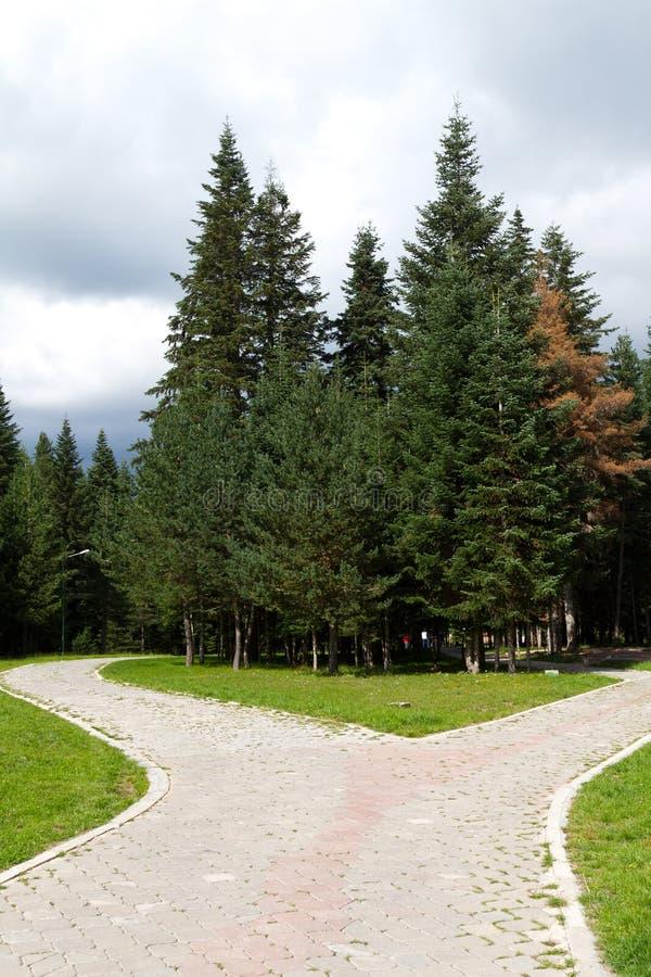Деревья сосенки Стоковое Фото