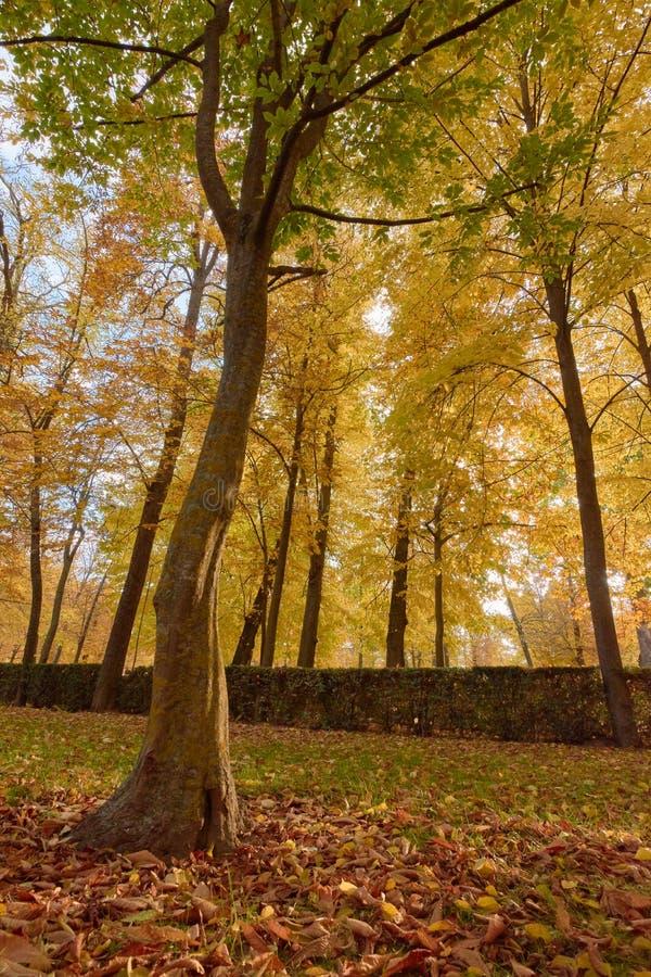 Деревья с коричневыми листьями в саде партера в осени стоковое фото rf