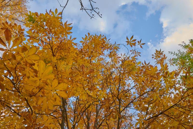 Деревья с коричневыми листьями в саде партера в осени стоковые изображения