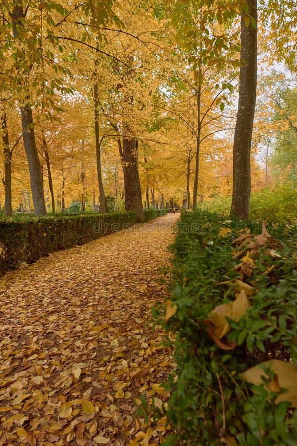 Деревья с коричневыми листьями в саде партера в осени стоковые фотографии rf