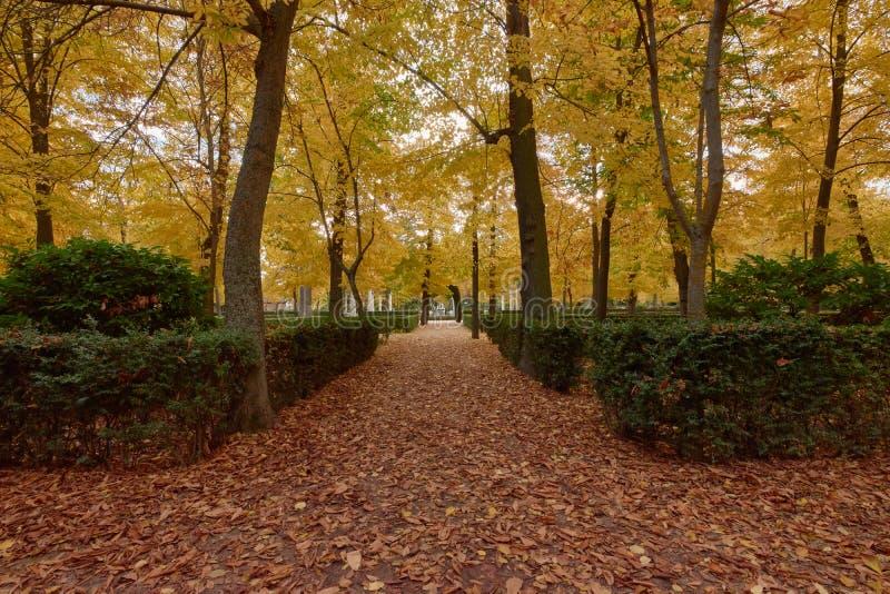 Деревья с коричневыми листьями в саде партера в осени стоковое изображение rf