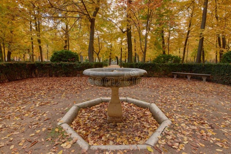 Деревья с коричневыми листьями в саду Партера осенью стоковое изображение rf