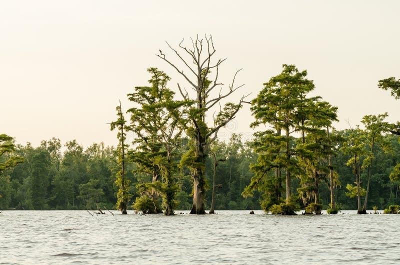 Деревья с мхом стоковое изображение