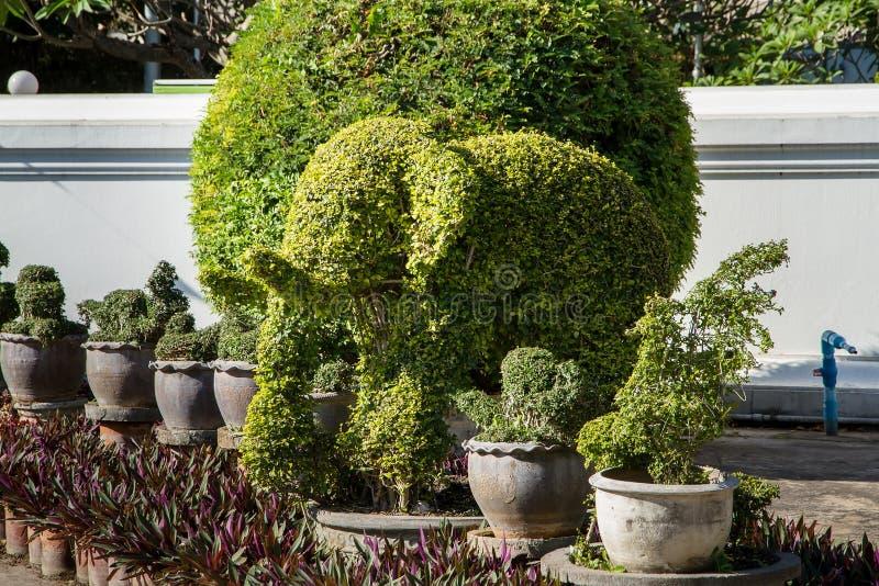 Деревья слона малое дерево лист может принудить к любой форме, очень po стоковое изображение