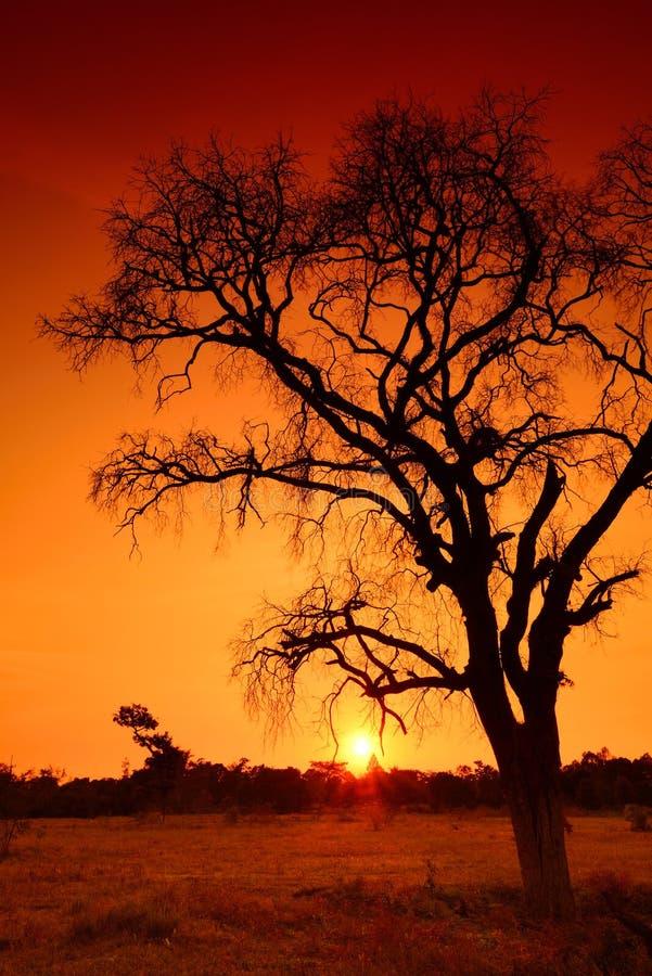Деревья тени мертвые стоковая фотография rf