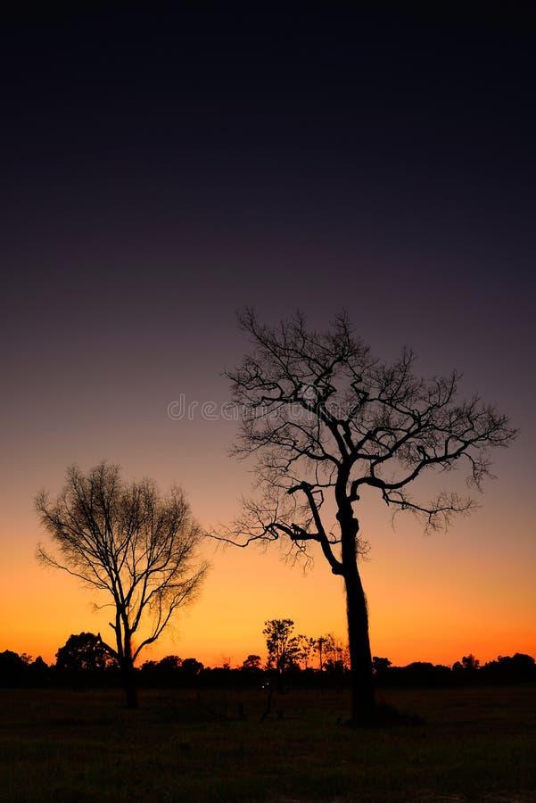 Деревья тени мертвые стоковое фото rf