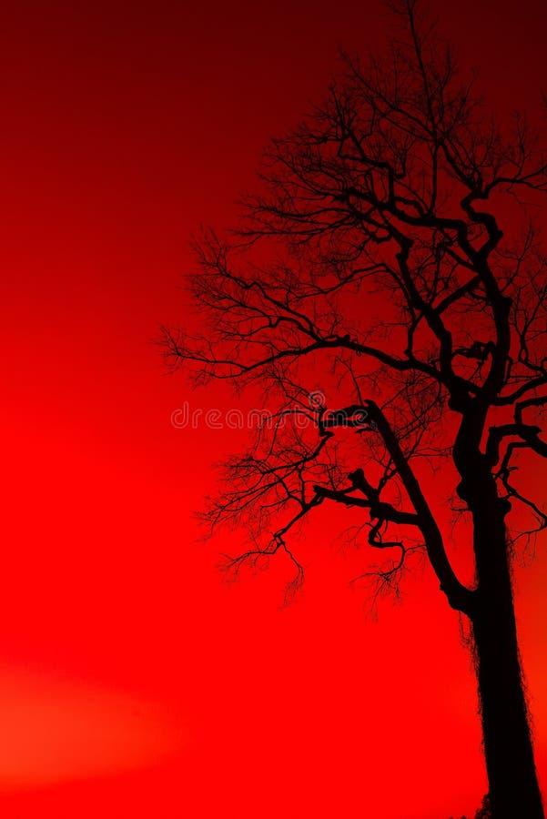 Деревья тени мертвые стоковые фото