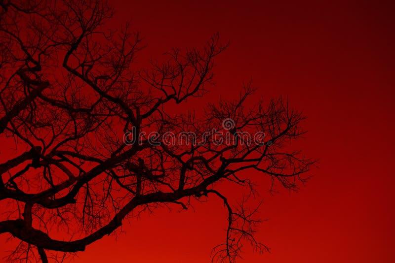 Деревья тени мертвые стоковые фотографии rf