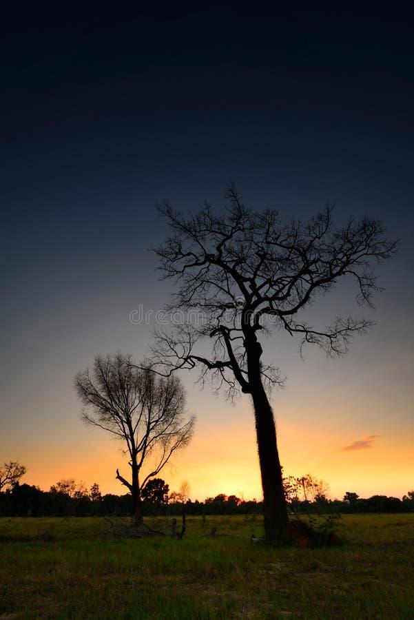 Деревья тени мертвые стоковые изображения rf