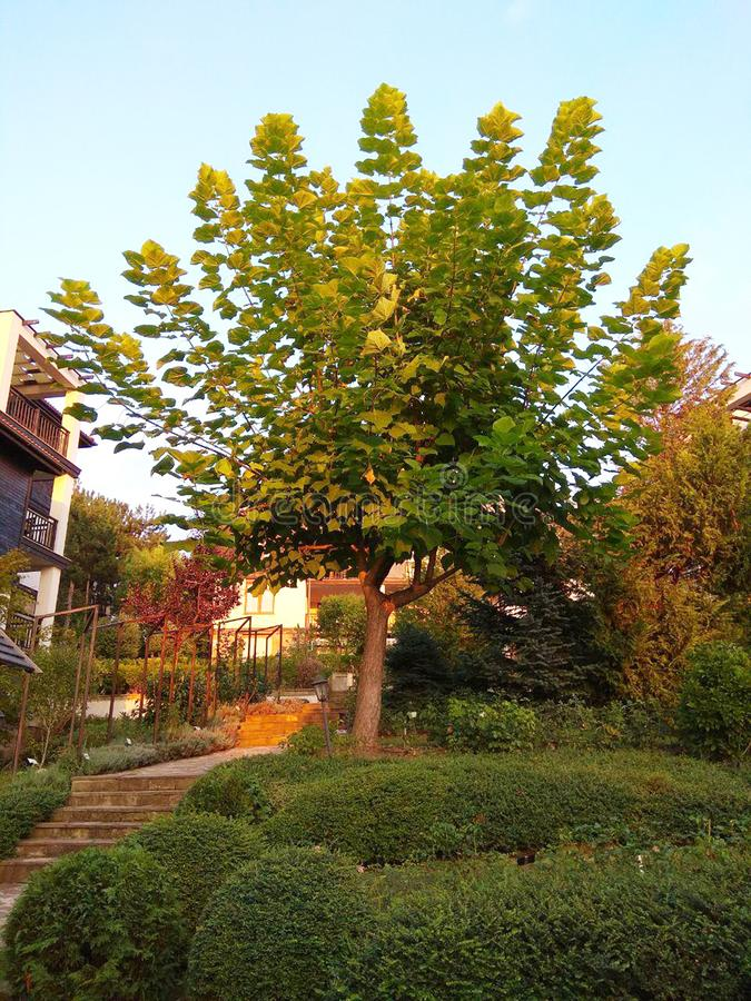 Деревья, трава и чистый воздух, красивый сад лета стоковые изображения rf