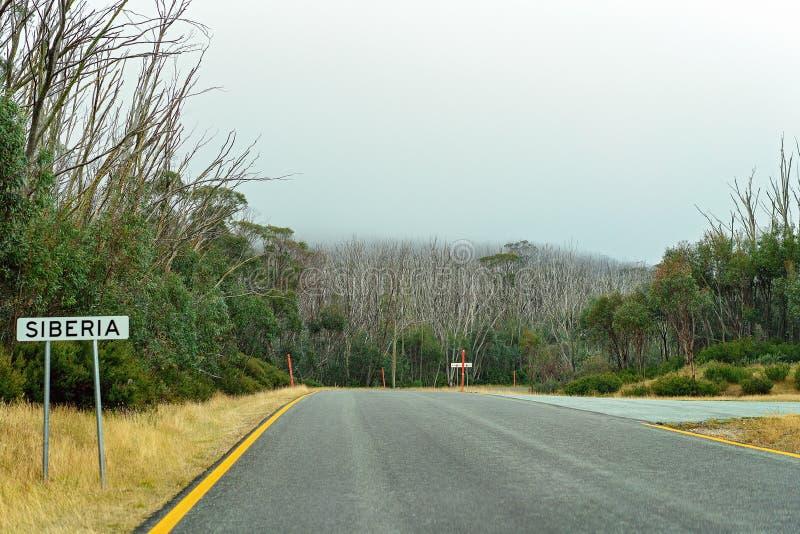 Деревья умирая в австралийском национальном парке стоковое фото rf