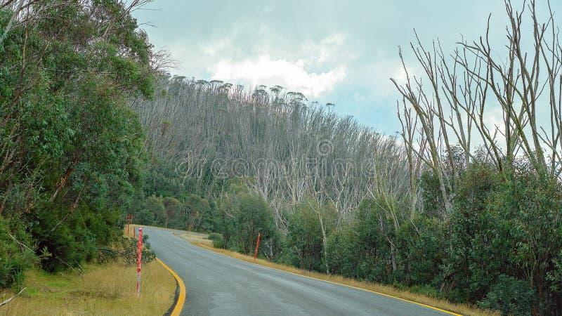 Деревья умирая в австралийском национальном парке стоковые изображения