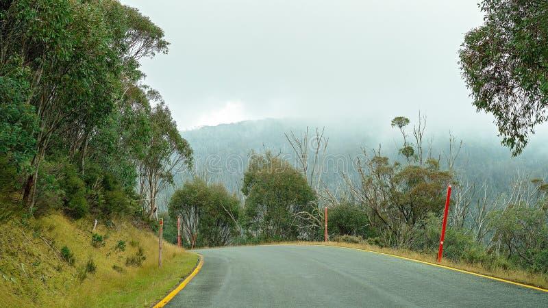 Деревья умирая в австралийском национальном парке стоковое изображение rf