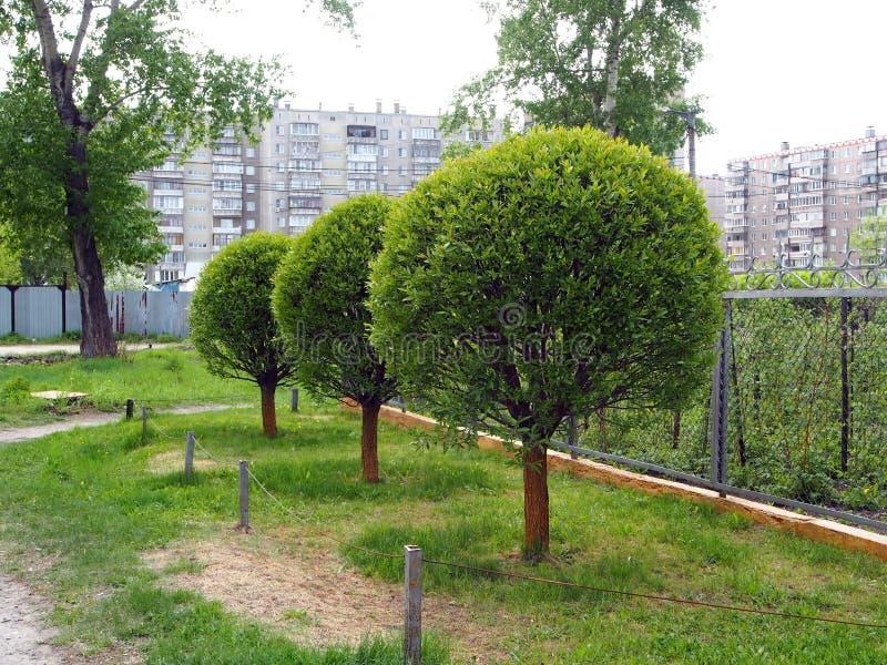 Деревья уравновесили в форме шарика стоковое фото