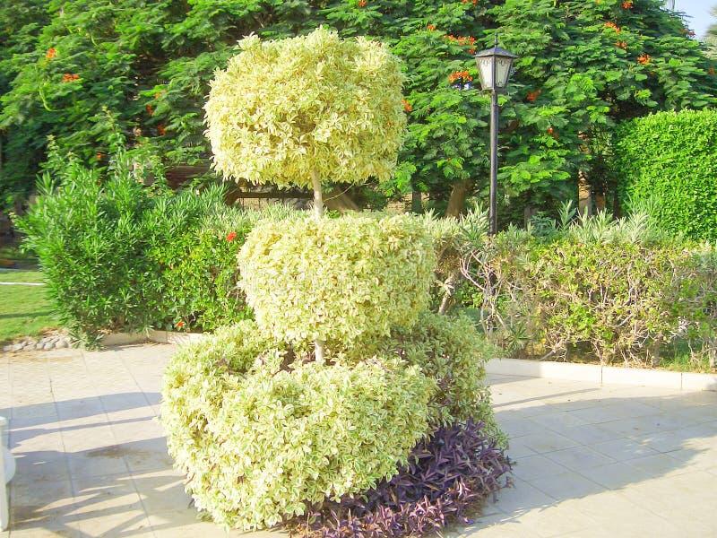 Деревья уравновешенные зеленым цветом стоковая фотография