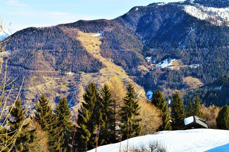 Деревья, холмы, снег и швейцарец Альпы стоковые фотографии rf