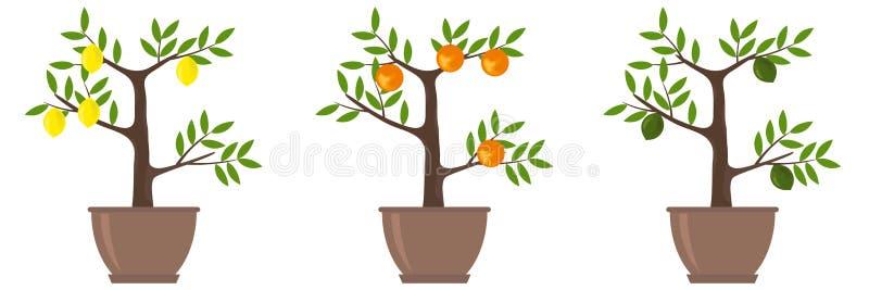 Деревья цитруса иллюстрация вектора