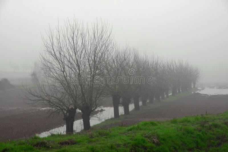 Деревья шелковицы между туманом в итальянской равнине стоковые изображения