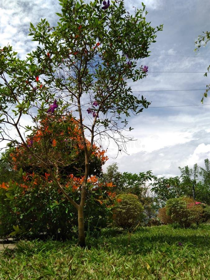 Деревья Шри-Ланка полного цвета красивые стоковые фото